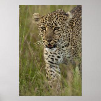 Kenya, Masai Mara Game Reserve. African 2 Poster