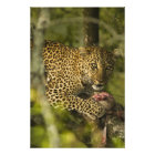 Kenya, Masai Mara Game Reserve. African 3 Photo Print