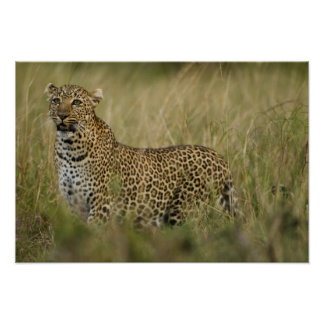 Kenya, Masai Mara Game Reserve. African 3 Poster
