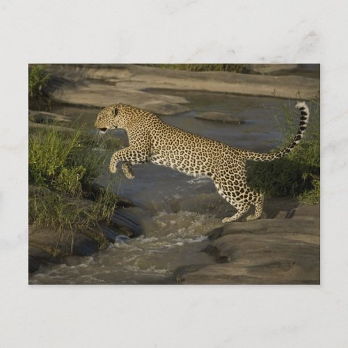 Kenya Masai Mara Game Reserve African 4 Postcard