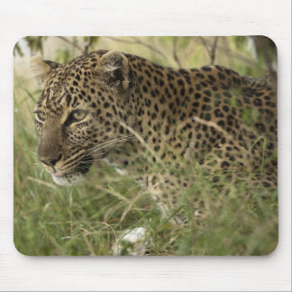 Kenya, Masai Mara Game Reserve. African Leopard 2 Mouse Pad