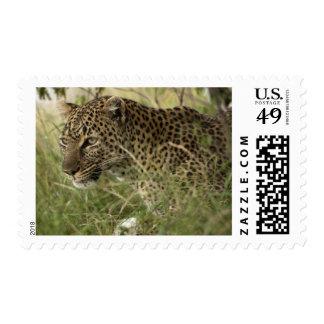 Kenya Masai Mara Game Reserve African Leopard 2 Postage