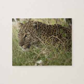 Kenya, Masai Mara Game Reserve. African Leopard 2 Puzzles