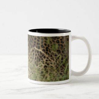 Kenya, Masai Mara Game Reserve. African Leopard 2 Two-Tone Coffee Mug