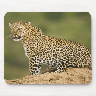 Kenya, Masai Mara Game Reserve. African Leopard Mouse Pad