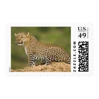 Kenya Masai Mara Game Reserve African Leopard Postage