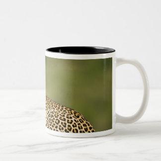 Kenya, Masai Mara Game Reserve. African Leopard Two-Tone Coffee Mug