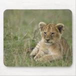 Kenya, Masai Mara Game Reserve. African Lion Mouse Pad
