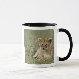 Kenya, Masai Mara Game Reserve. African Lion Mug