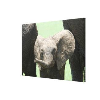 Kenya:  Masai Mara Game Reserve (also known as Canvas Print
