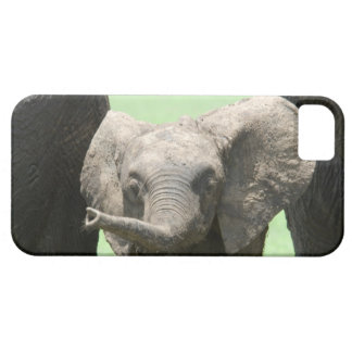 Kenya:  Masai Mara Game Reserve (also known as iPhone SE/5/5s Case