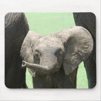 Kenya:  Masai Mara Game Reserve (also known as Mouse Pad