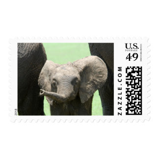 Kenya:  Masai Mara Game Reserve (also known as Postage