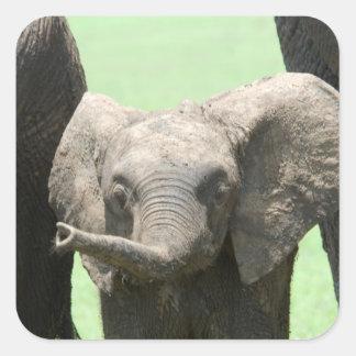Kenya:  Masai Mara Game Reserve (also known as Square Sticker