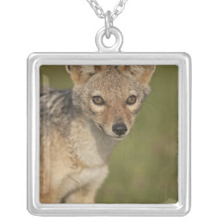 Kenya, Masai Mara Game Reserve. Black-backed 2 Silver Plated Necklace