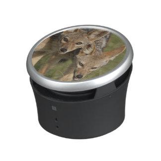 Kenya, Masai Mara Game Reserve. Black-backed Bluetooth Speaker