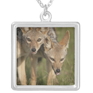 Kenya, Masai Mara Game Reserve. Black-backed Silver Plated Necklace