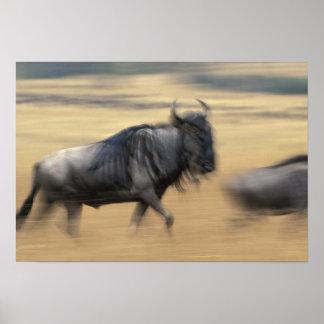 Kenya, Masai Mara Game Reserve, Blurred image Poster