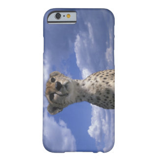 Kenya, Masai Mara Game Reserve, Close-up Barely There iPhone 6 Case