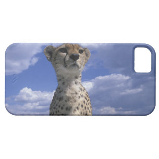 Kenya, Masai Mara Game Reserve, Close-up iPhone 5 Covers