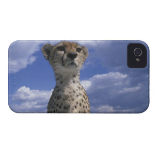 Kenya, Masai Mara Game Reserve, Close-up iPhone 4 Cover
