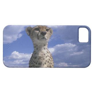 Kenya, Masai Mara Game Reserve, Close-up iPhone SE/5/5s Case