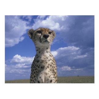 Kenya, Masai Mara Game Reserve, Close-up Postcard