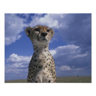 Kenya, Masai Mara Game Reserve, Close-up Poster