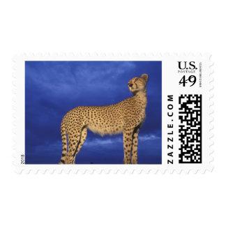 Kenya Masai Mara Game Reserve Flash-lit Postage Stamp