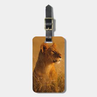 Kenya: Masai Mara Game Reserve, head of female Luggage Tag