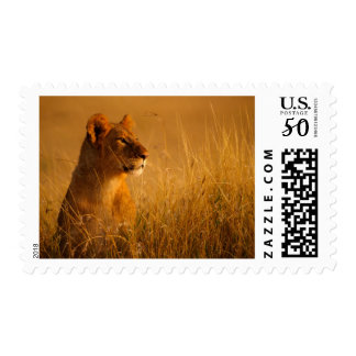 Kenya: Masai Mara Game Reserve, head of female Postage