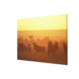 Kenya, Masai Mara Game Reserve, Herd of Canvas Print