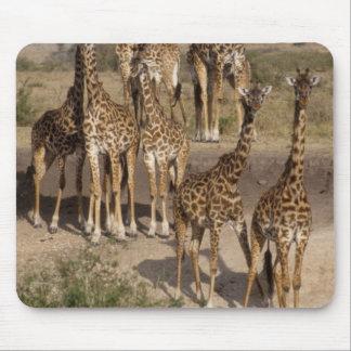 Kenya: Masai Mara Game Reserve herd of one dozen Mouse Pad