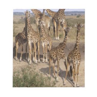 Kenya: Masai Mara Game Reserve herd of one dozen Note Pad