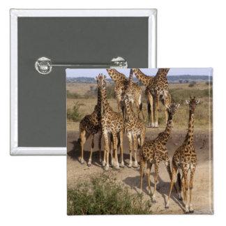 Kenya: Masai Mara Game Reserve herd of one dozen Pinback Button