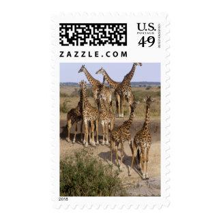 Kenya Masai Mara Game Reserve herd of one dozen Postage