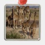 Kenya: Masai Mara Game Reserve herd of one dozen Square Metal Christmas Ornament