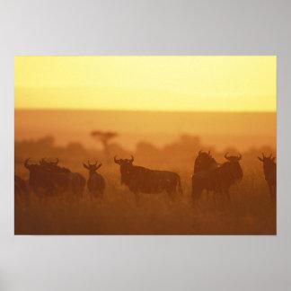 Kenya, Masai Mara Game Reserve, Herd of Poster