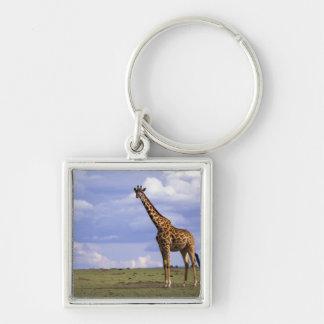 Kenya, Masai Mara Game Reserve. Kenyan Giraffe Keychain