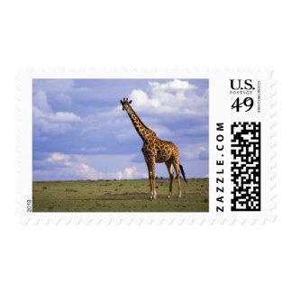 Kenya Masai Mara Game Reserve Kenyan Giraffe Postage Stamps