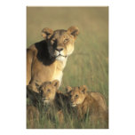 Kenya, Masai Mara Game Reserve, Lion cubs Photo Art