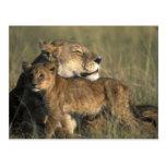 Kenya, Masai Mara Game Reserve, Lioness Postcards