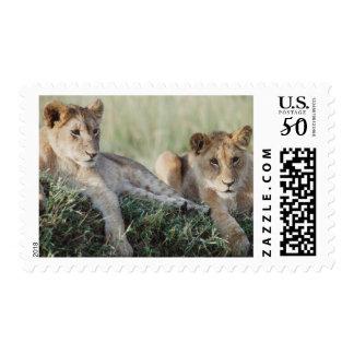 Kenya, Masai Mara, Lion Cubs sitting Postage