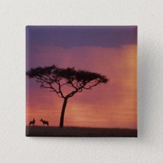 Kenya: Masai Mara National Park, Sunset. Button