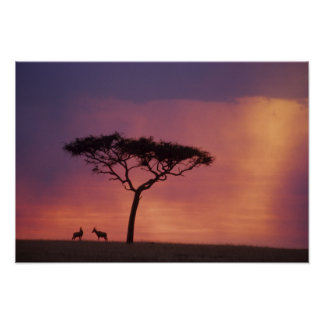 Kenya: Masai Mara National Park, Sunset. Poster