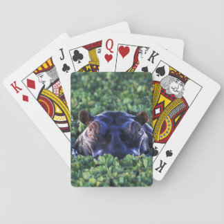 Kenya, Masai Mara National Reserve. Deck Of Cards
