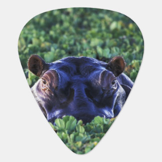 Kenya, Masai Mara National Reserve. Guitar Pick