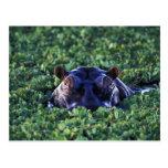 Kenya, Masai Mara National Reserve. Post Cards