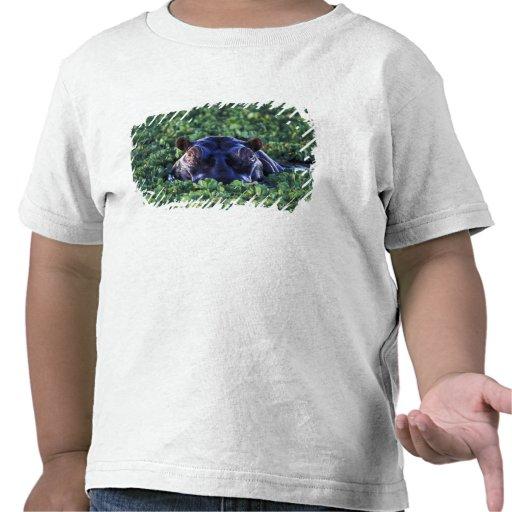 Kenya, Masai Mara National Reserve. T-shirts