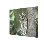 Kenya, Masai Mara Reserve. Close-up of Scops Gallery Wrapped Canvas